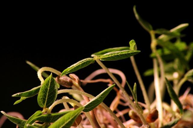 malé klíčky rostlinek